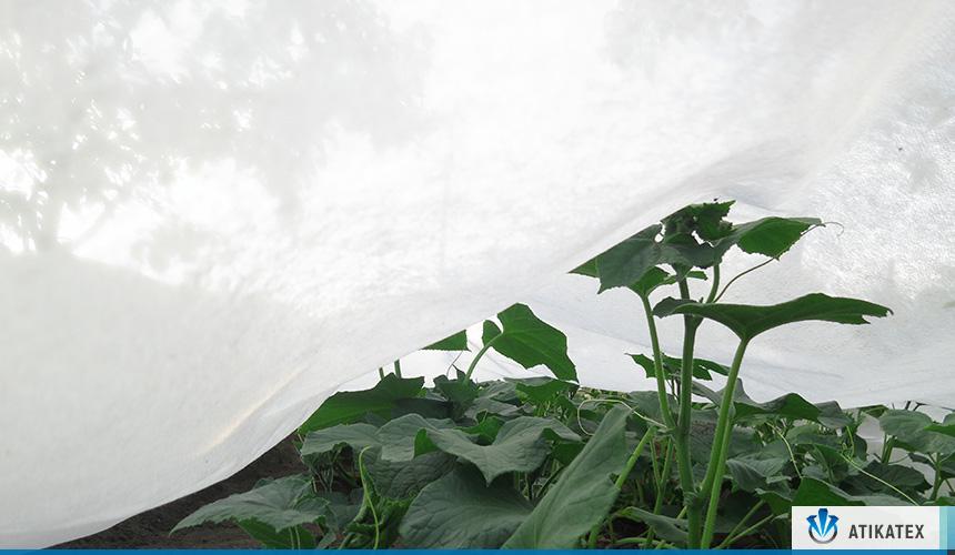 Tela No Tejida y su uso en la Agricultura